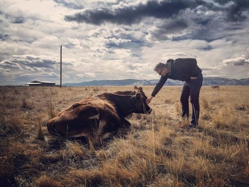 Simeon Cow.jpg