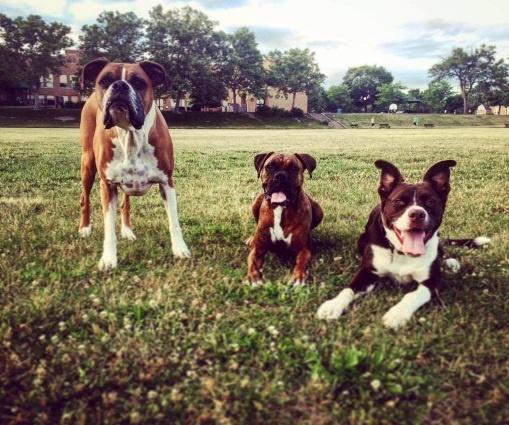 Simeon Dogs.jpg
