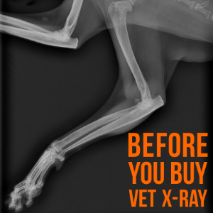 Veterinary X-Ray Header.png